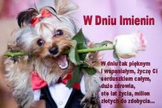 Just for you! Romance And Love, Dog Cat, Just For You, Pets, Animals, Swallow, Tango, Sweet, Roses