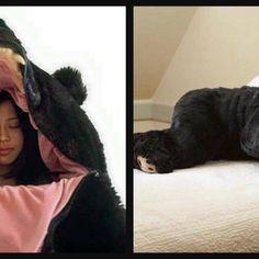 Someone Created A Bear Sleeping Bag For All Your Hibernation Needs