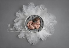 Newborn Dital Backdrop White Feathers