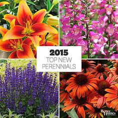 The Best New Perennials for 2015 Wonderful ideas for some real pizzazz in your garden.