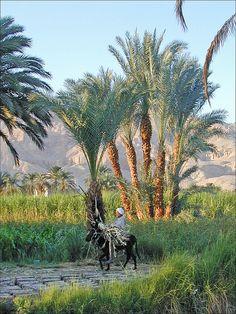 8-daagse luxe nijlcruise van ECI reizen met manlief in 2008. Thèbes, Egypt
