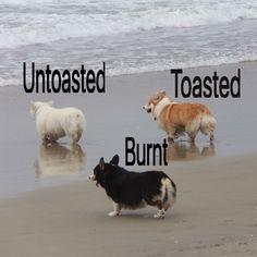 I like the toasted one