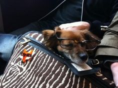 Dog in a bag wearing specs. Anything goes on the tube.