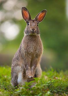 rabbit by Robert Adamec on 500px