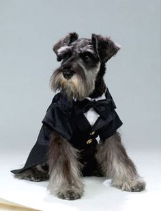 The Well-Dressed Dog At A Wedding: Trend-Setting Elegance For Dog Grooms