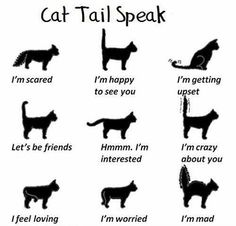 Now I can understand what my owner thinks about me. #9gag
