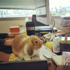 Bring your bunny to work day.