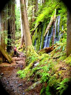 Umpqua National Forest. Complete with pristine trails, hot springs, waterfalls, an a river. I LOVE this place!