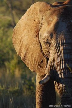 Moment of peace - Save the elephants Elephants Never Forget, Save The Elephants, Elephant Love, Elephant Images, Elephant Art, Beautiful Creatures, Animals Beautiful, Elephas Maximus, Baby Animals