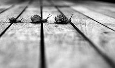 crossing snails