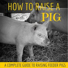 It is spring in South Carolina and that can only mean one thing! It is feeder pig time and it means it's time to learn how to raise a pig.