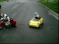 Dog On Motorcycle Tows The Car