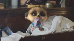 Sergei's Tie - Compare the Meerkat
