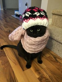 This cat who is demonstrating proper winter bundling. | 31 Pictures That Will Restore Your Faith In Cats