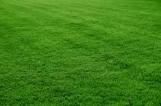 You need Lawn Aeration Tips Please visit this site. Here you know many information.I got much clear idea from this website.