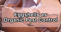 During the winter months, distribute your shells over the plot of land where you...