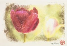 Flower of Tulip where my signature and the stamp were in
