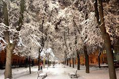 Pozrite sa, ako v stredu vyzerali zasnežené Košice   Spravodajstvo   kosice.korzar.sme.sk Mesto, Snow, Outdoor, Outdoors, Outdoor Life, Garden, Human Eye