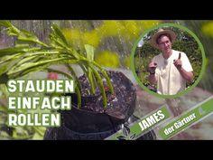 So schneidet man Stecklinge von Stauden um sie zu vermehren!   James der Gärtner - YouTube Youtube, Movie Posters, Landscape Nursery, Garden Art, Shade Perennials, Tips And Tricks, Film Poster, Popcorn Posters