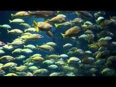 Amazing tropical fish in the Ocean Tank