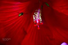 Bee Red - null Bee, Nature, Flowers, Bees, Royal Icing Flowers, The Great Outdoors, Flower, Florals, Mother Nature