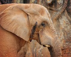 Angel Sharum Photography: 365 Photos a Year: Day 44: Elephants at Knoxville ...
