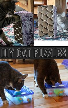 Does you kitty seem bored? Try making these DIY Cat Puzzles!