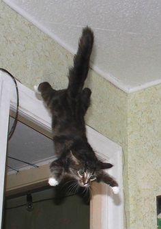 Лучшие фотографии с конкурса «Самый энергичный кот». Комментарии : LiveInternet - Российский Сервис Онлайн-Дневников