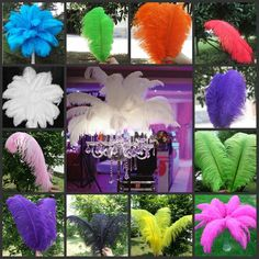 Feathers 41199: Wholesale 10 50 100Pcs High Quality Natural Ostrich Feathers 6-24Inch 15-60Cm -> BUY IT NOW ONLY: $99.99 on eBay!