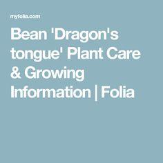 Bean 'Dragon's tongue' Plant Care & Growing Information | Folia
