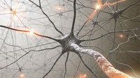 Neuroplasticity: How To Rewire Your Brain Coupon|$19 85% off #coupon