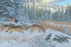 WOLF / FOX / COYOTE