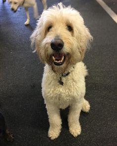 Bert. A happy dude.  #dogs #petsofinstagram #santamonica