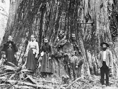 Olympia pioneer family posing with old-growth fir tree