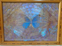 Vintage Inlaid Wood Tray with Blue Butterfly Wings