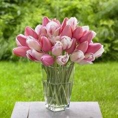 Tulip Blushing Girl - Creamy white flowers with a buttery glow, and a delicate tracery of pink outlining each petal. Elegant on their own, pretty combined with Menton, as seen here, and striking when planted with sultry, deep maroon Queen of Night