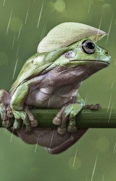 It's Raining by Lessy Sebastian