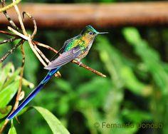 Hummingbird Pics ®: Galería Fotográfica 3 / Photograph Gallery 3