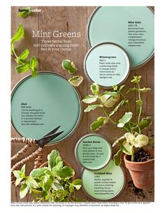 Here are some great mints as you plan on painting a nursery, or any room for that matter :) #mint #paint #wallcolor #nursery
