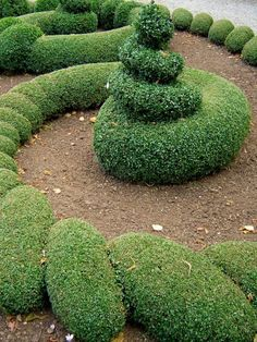lovely topiary