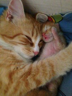 .momma kitty & her kitten.