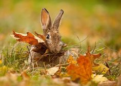 fall is here, meaning that thanksgiving is right around the corner. make sure that your rabbit is eating their share of hay instead of stuffing their face full of all the leaves that have fallen off the trees. get them their hay from www.rabbitholehay.com, so they can spend their thanksgiving just as happy as you:)
