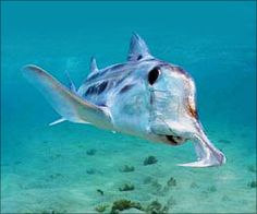 Shark Fin Ban Movement Joined by Spain's Largest Hotel Chains