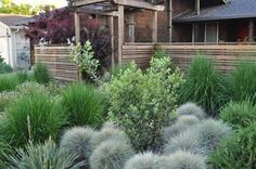Landscaping And Outdoor Building , Outdoor Landscaping With Ornamental Grasses…