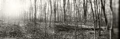 Forest, Pocono Mountains, Pennsylvania, USA Photographic Print by Panoramic Images at Art.com