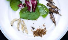 The market for insect-based foods in the US will likely remain limited to…