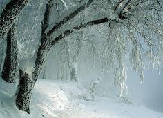 Snowy Kingdom - by Mikhail Tkachev - Pixdaus