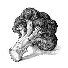 Brockley Market, Saturday Lewisham College Car Park, Lewisham Way, London, Lion Illustration, Botanical Illustration, Broccoli Drawing, Vegetable Drawing, Art Nouveau, Gcse Art Sketchbook, Sketches Of Love, Mountain Drawing, Still Life Drawing