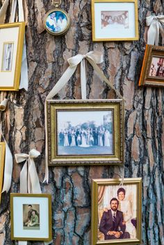 Family photos hung for the wedding on a tree. Perfect for an outdoor wedding/reception. LOVE!