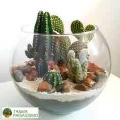 Indoor Cactus Garden, Succulent Gardening, Succulents Garden, Cactus Plants, Indoor Plants, Terrariums, Garden Terrarium, Succulent Terrarium, Cactus Centerpiece